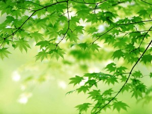 green-leaves-344-2