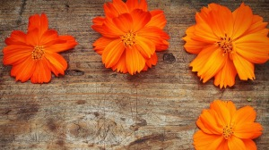 orange-flowers-wood-1080